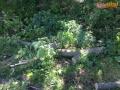 drzewo na drodze 03