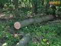 drzewo na drodze 08