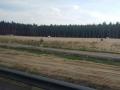 S3 Lubin - Polkowice- Kaźmierzów (11)